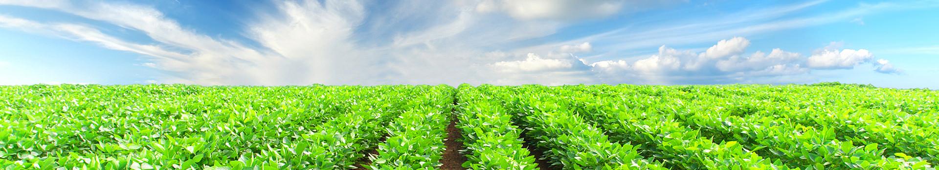 OTP Agricol számlacsomag